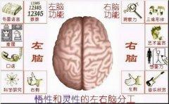 右脑开发之简单任务